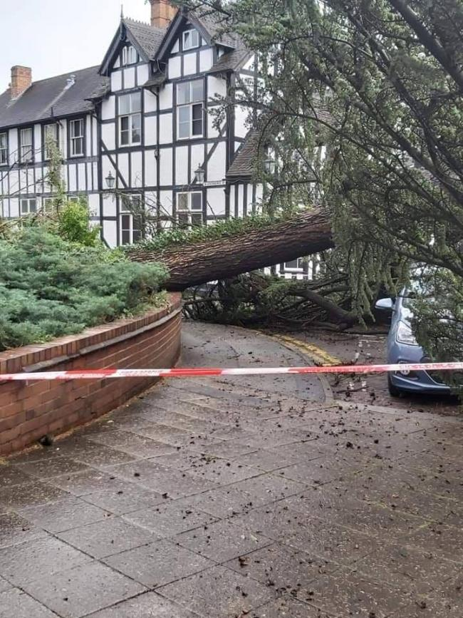 The fallen tree. Picture credit: Spotted Droitwich.