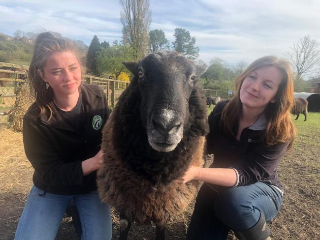 Claire Thompson and Lydia Parker have now been locked down at Brockswood, a local animal sanctuary, away from their homes now for 8 weeks! They are stopping there to ensure they remain safe and healthy so that the animals are still cared for 24/7 while other staff are shielding. Not officially recognised as key workers but animals still need to be rescued/cared for too at this time.