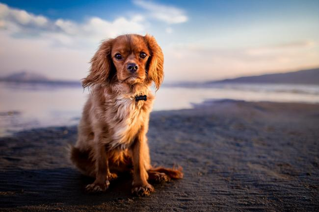 These are the cheapest and most expensive dog breeds to keep and care for in 2020. Picture: Pixabay