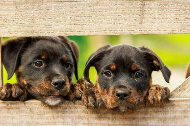 Residents are being urged to adopt dogs rather than buy them in private sales. Picture: Pixabay