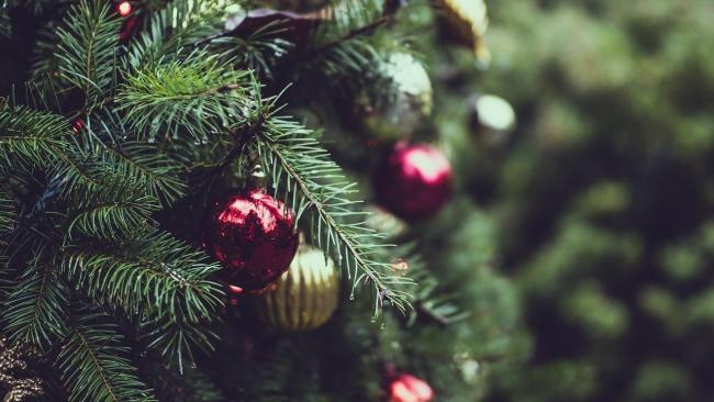 Here's where you can pick up a real Christmas tree