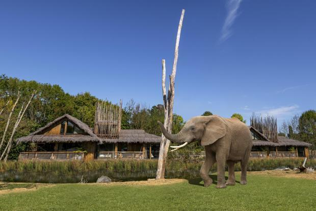 The new luxury lodges overlooking West Midland Safari Park's elephant and cheetah enclosures were due to open this month