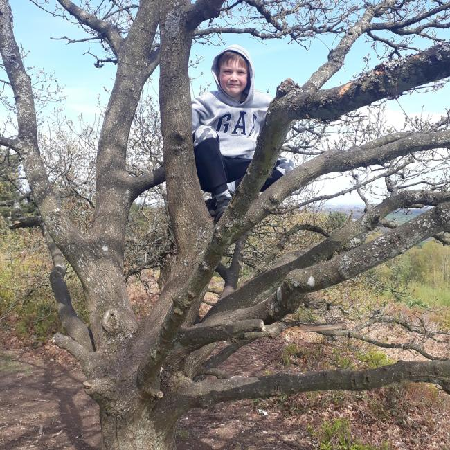 Freddie Innes, aged 8 has climbed 110 trees for Macmillan in memory of his late grandad.