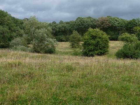 Will campaign: Randan Meadows, near Bromsgrove, is one of the nature reserves that has benefited from the trust's work. Ref:s