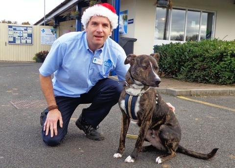 Festive fund-raiser: Blue Cross Animal Adoption Centre manager Neil Edwards and Russell the dog get in the festive spirit for the centre's Christmas fair. Ref:s