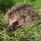 Willows Hedgehog Rescue is offering to help a local school grow its own wildlife garden.