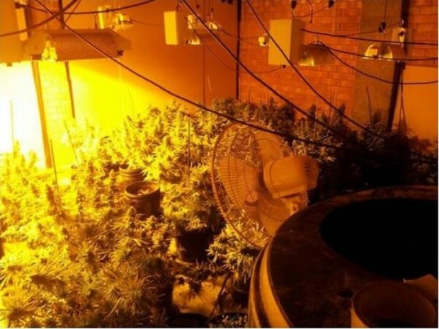 CANNABIS: Police officers arrested a man after this cannabis farm was discovered in Catshill. SP