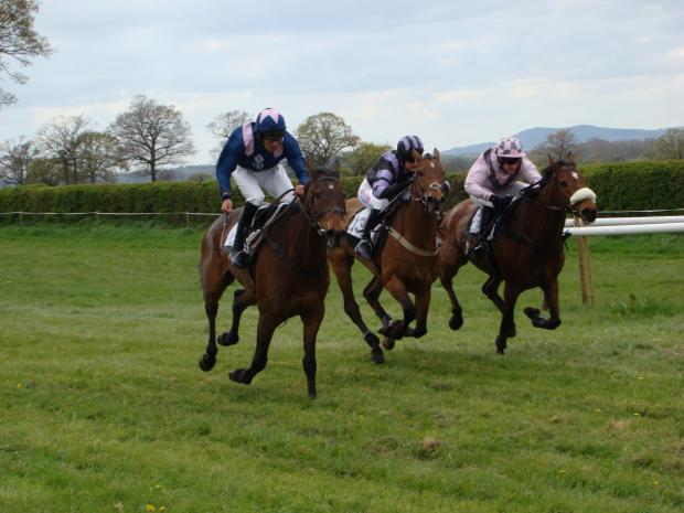 Temple Grandin (nearside), Unwanted Gift (centre) and the eventual winner Iberico between the final two fences of the Confined race.