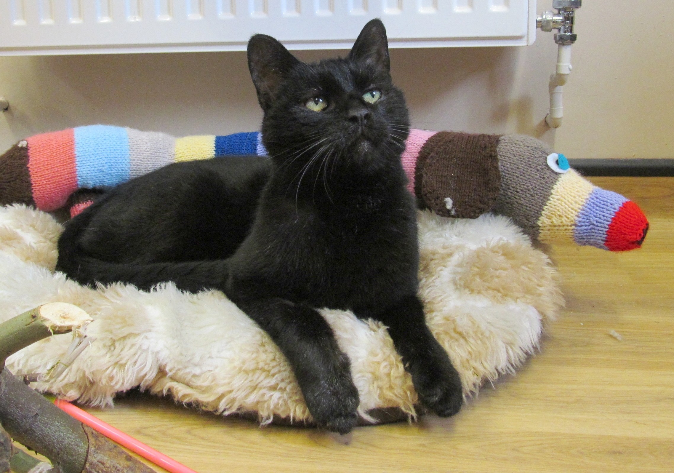 HOME APPEAL: Casey, dubbed 'the most unwanted pet in Britain', needs a Bromsgrove home. SP