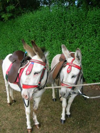 Mabel and Hanna the donkeys will be at the Animals R Magic event. SP