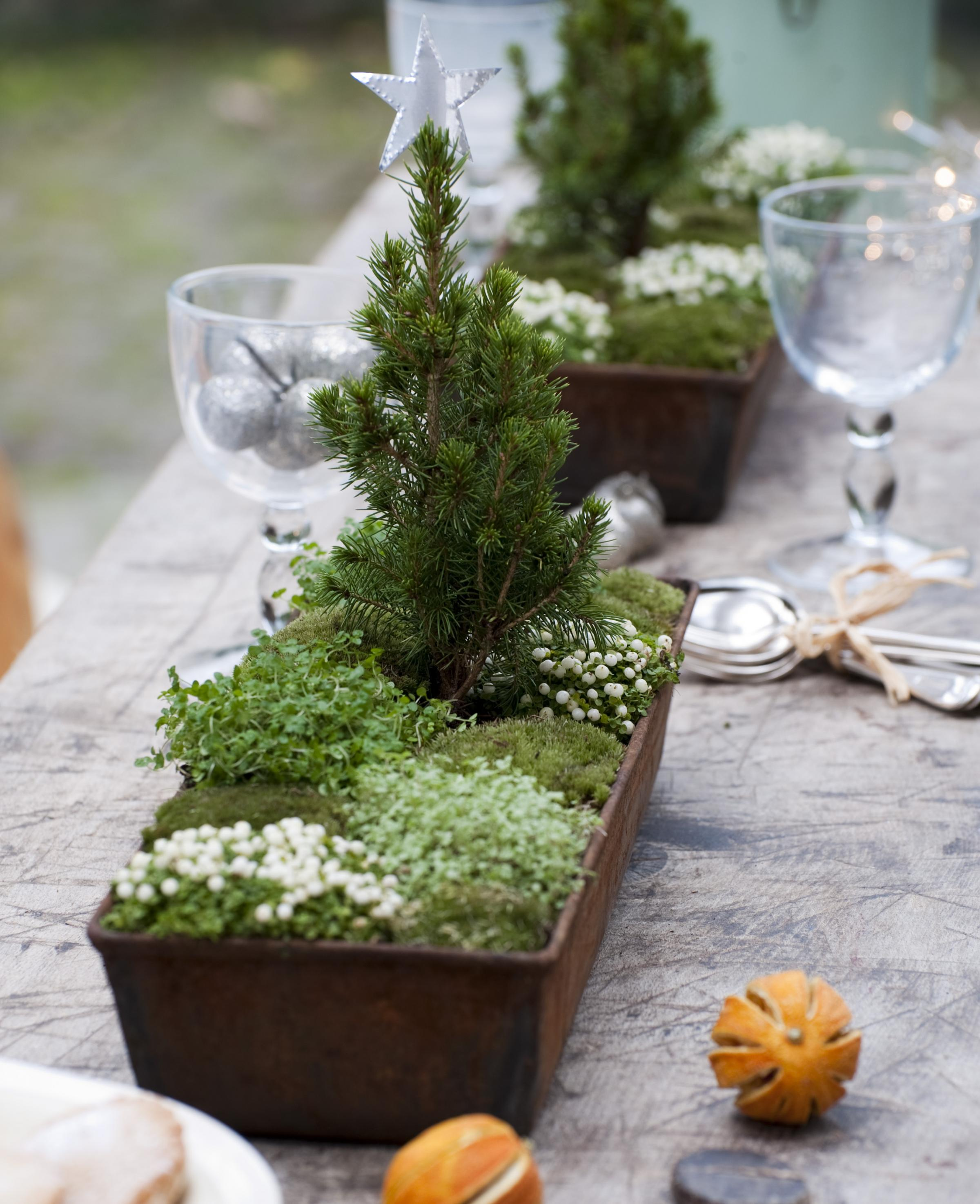 Festive displays the natural way