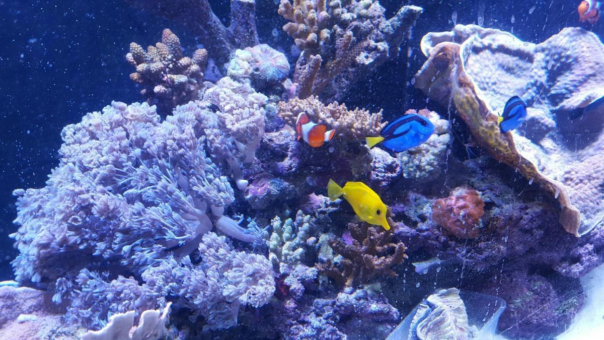 Fish aquarium kidderminster - Leading Fish And Aquarium Specialists Set To Relocate To Bromsgrove District