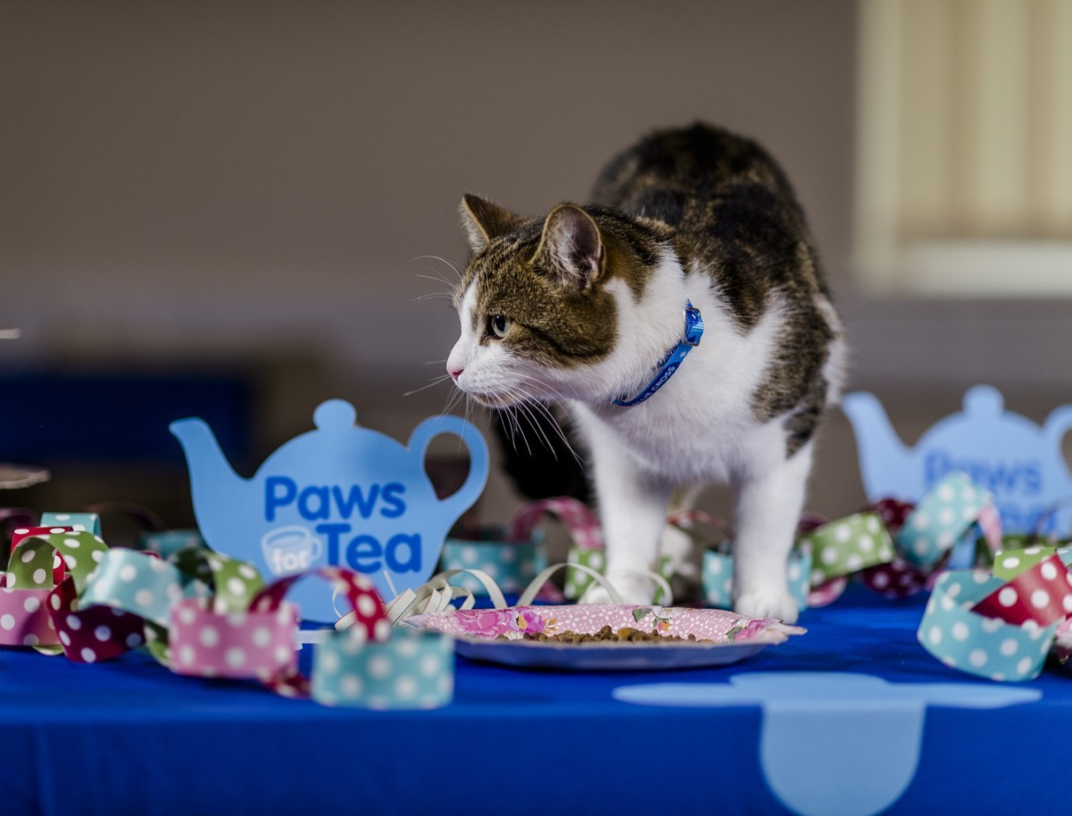 Local animal lovers are invited to join Blue Cross for a special tea party